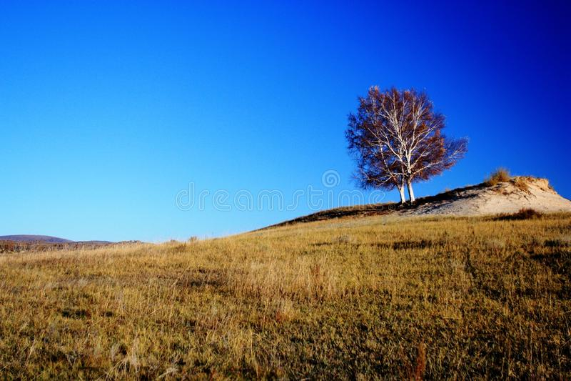 Paysage des prairies de Bashang photos libres de droits