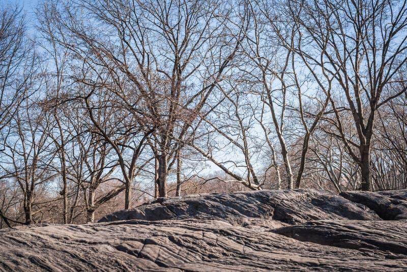 Paysage des roches du Central Park donnant sur les bois avec les branches des arbres sans feuilles de la fin du image stock
