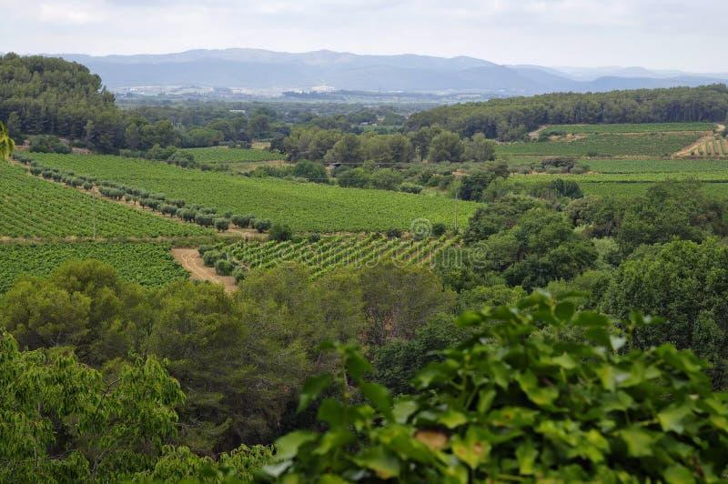 Paysage des vignobles dans la zone de vigne de Penedes image stock