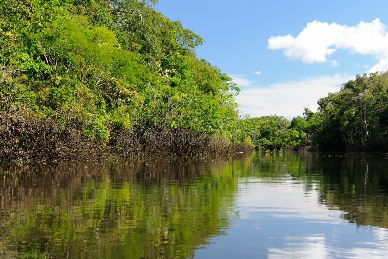 Paysage du fleuve Amazone en Colombie image stock