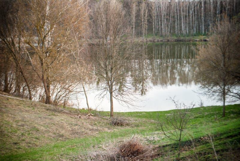 Paysage du lac et de la forêt au printemps égalisant image libre de droits