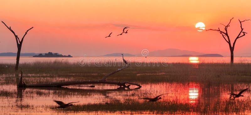 Paysage du Lac Kariba avec un ciel orange lumineux de coucher du soleil avec les oies égyptiennes et une silhouette d'un héron, Z photographie stock libre de droits