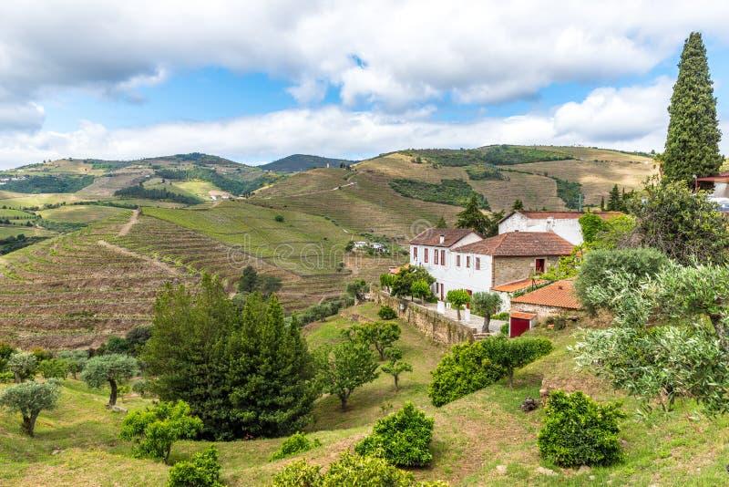 Paysage du regionin Portugal - vignobles de rivière de Douro photos stock