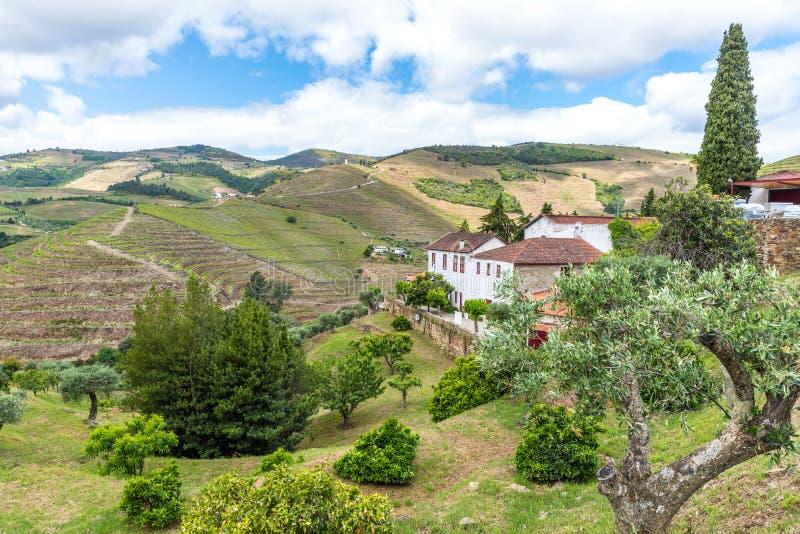 Paysage du regionin Portugal - vignobles de rivi?re de Douro images stock