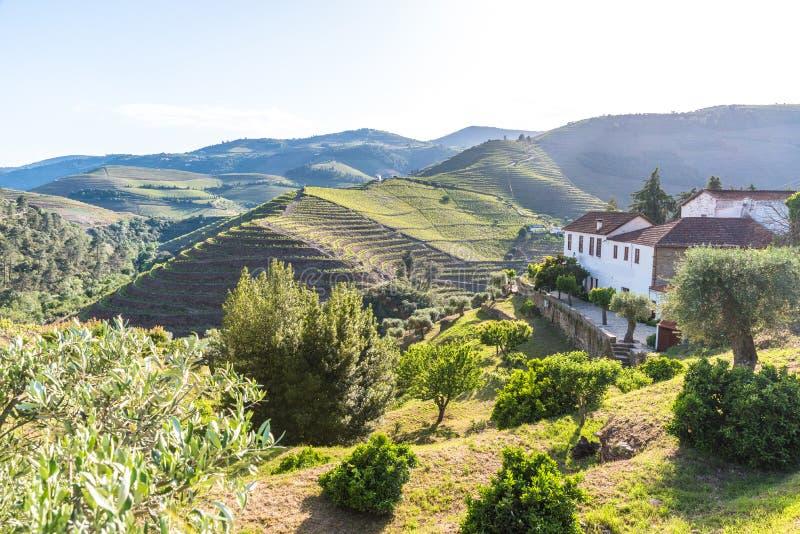 Paysage du regionin Portugal - vignobles de rivi?re de Douro photo libre de droits