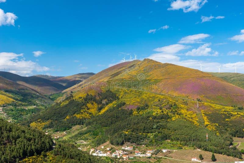 Paysage du regionin Portugal - vignobles de rivi?re de Douro image stock