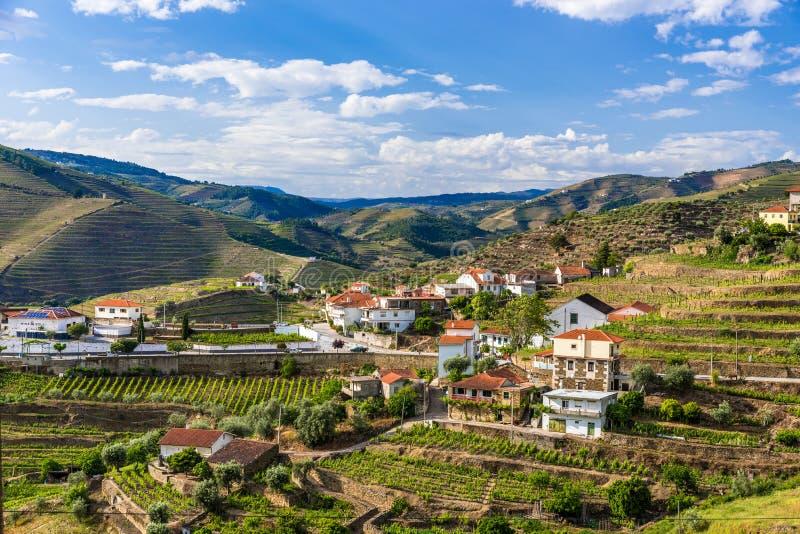 Paysage du regionin Portugal - vignobles de rivi?re de Douro image libre de droits