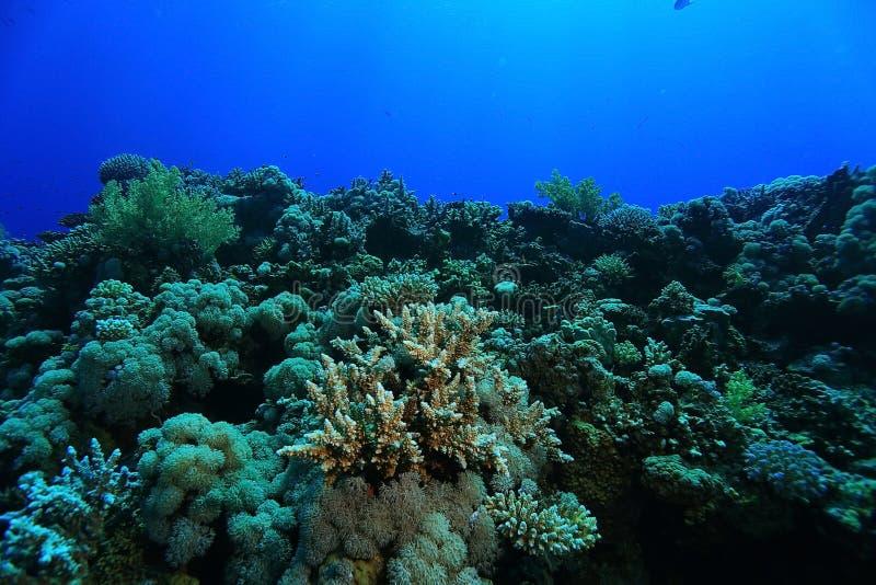 Paysage en mer tropicale photo libre de droits