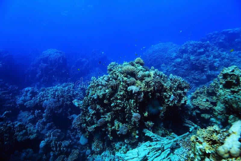 Paysage en mer tropicale photos libres de droits