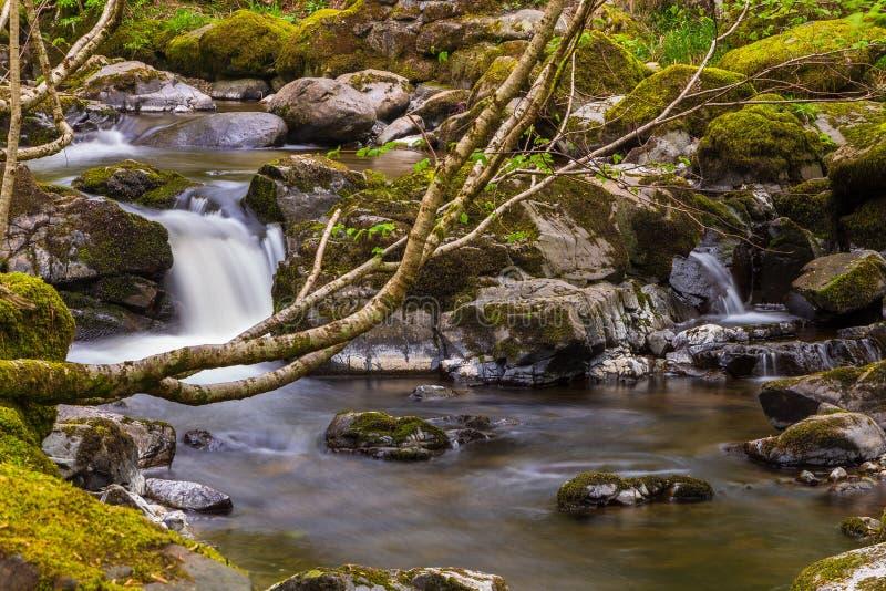 Paysage en parc national de secteur de lac, Cumbria, Angleterre images libres de droits