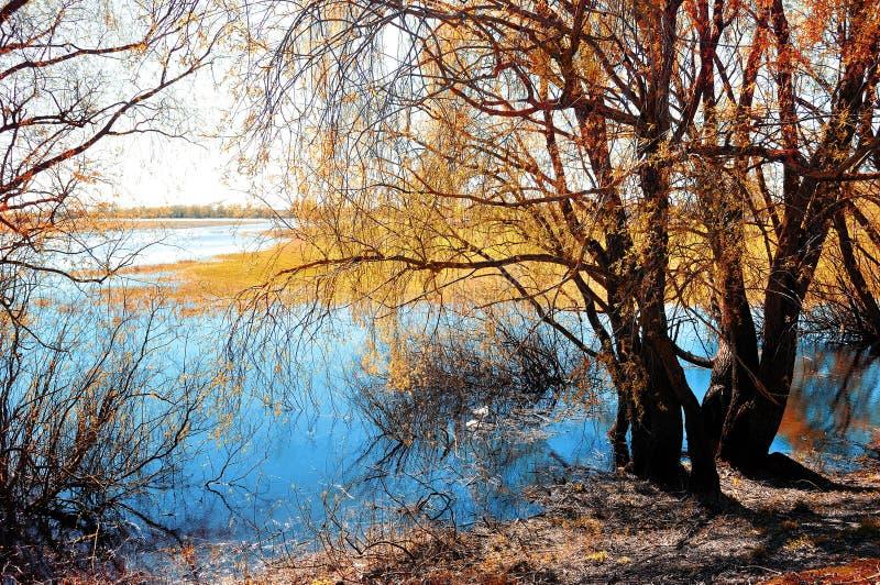 Paysage ensoleillé d'automne - saule jauni d'automne sous le soleil sur la banque de la petite rivière au coucher du soleil d'aut photographie stock
