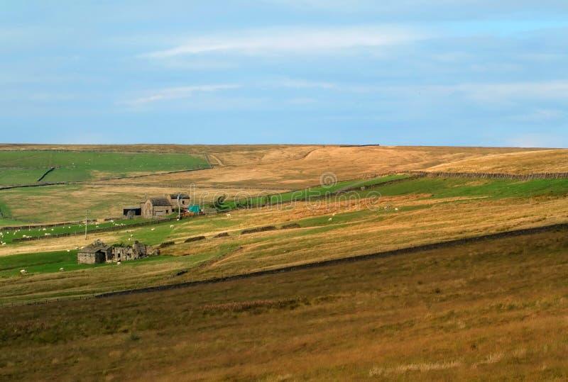 Paysage ensoleillé panoramique de penninite avec les murs en pierre de vallées typiques de Yorkshire et les fermes et les moutons image stock