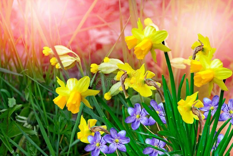 Paysage et fleurs de ressort images stock