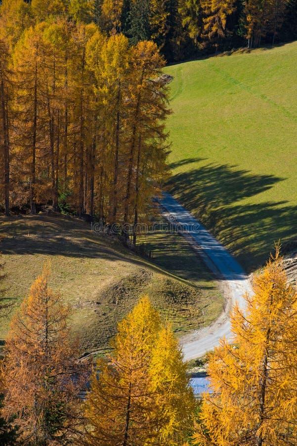 Paysage fantastique d'automne avec le mélèze jaune dans un jour ensoleillé Dol photographie stock