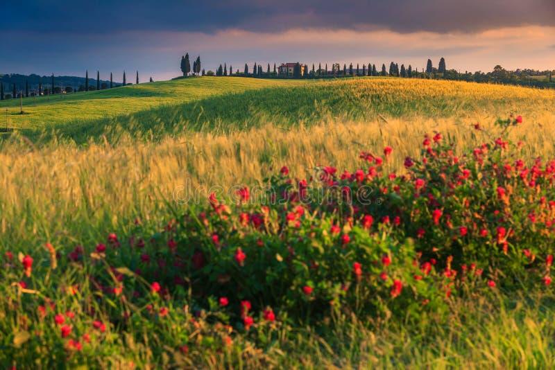 Paysage fantastique de la Toscane au coucher du soleil près de Pienza, Italie, l'Europe photo stock