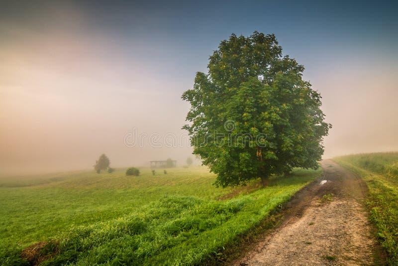 Paysage flou de matin dans Adrspach - Teplice bascule photos stock