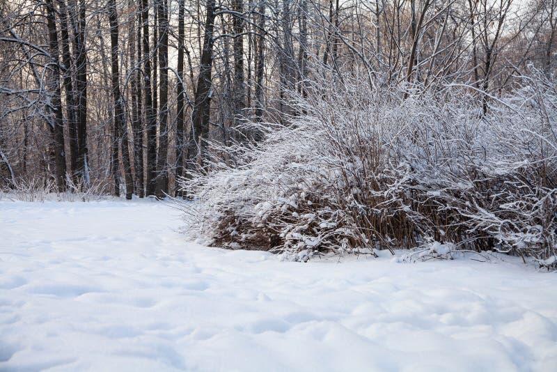 Paysage forestier hivernal couvert de neige de Fairytale Le parc naturel de Noël en plein air pour les salutations photographie stock