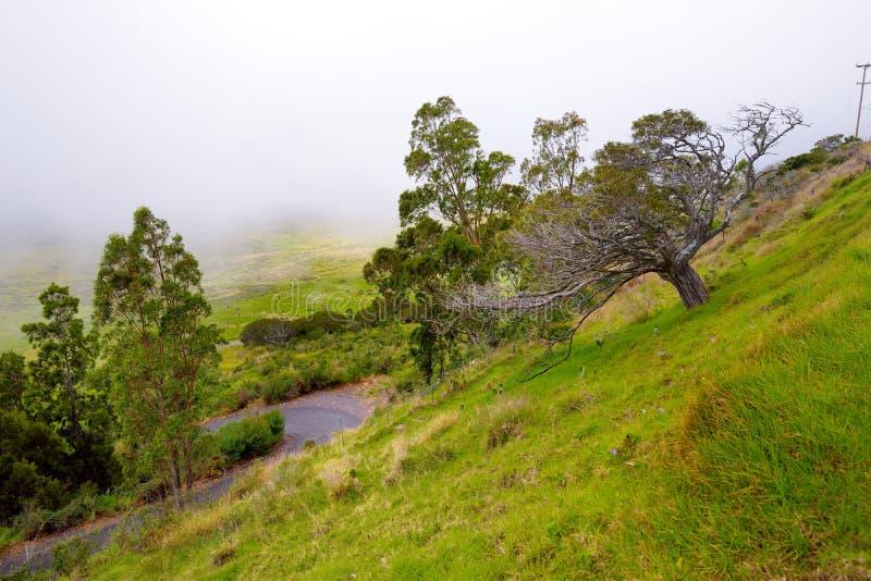 Paysage herbeux de la grande île d'Hawaï avec le brouillard à l'arrière-plan photo libre de droits