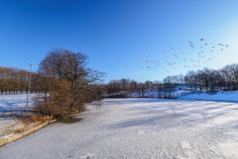 Paysage hivernal d'Oslo au parc de sculptures de Vigeland photographie stock libre de droits