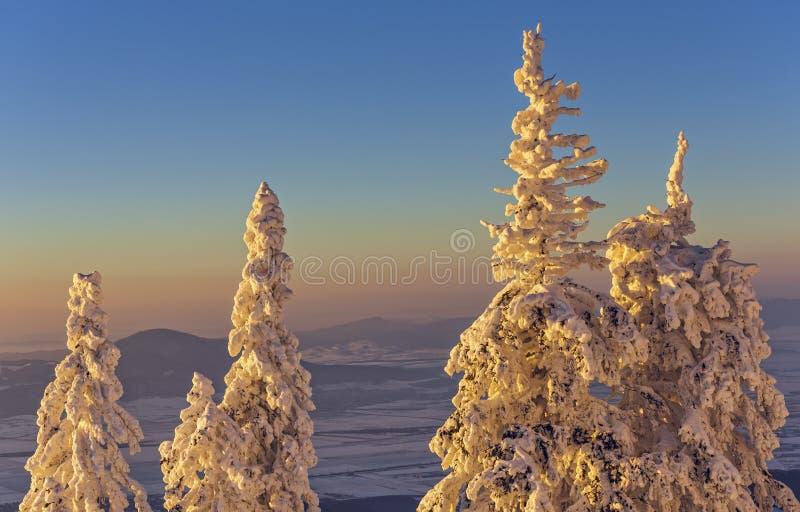 Paysage hivernal idyllique de coucher du soleil photo libre de droits
