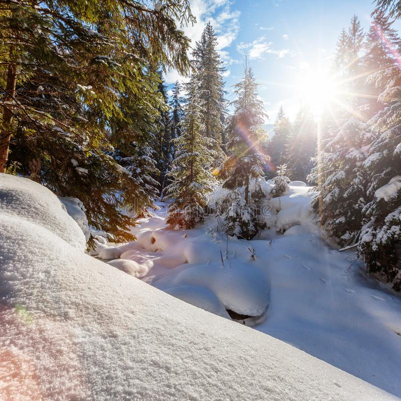 Paysage hivernal merveilleux Arbres givr?s de for?t de montagne d'hiver sous la lumi?re du soleil chaude paysage pittoresque de n photographie stock