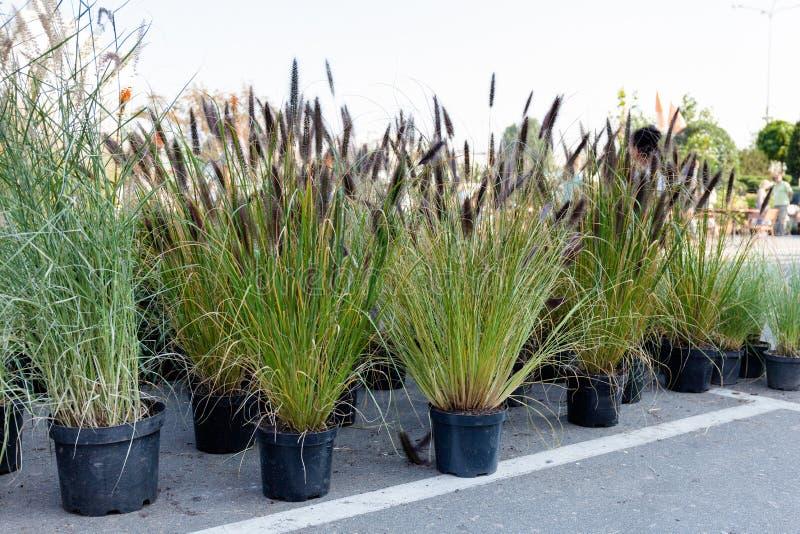 Paysage horticole de verdure et herbes de décoration de jardin Vente photographie stock