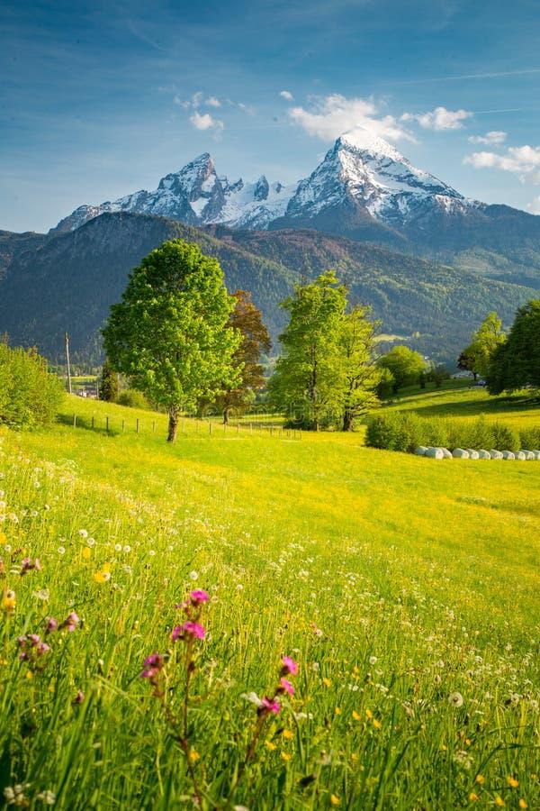 Paysage idyllique de montagne dans les Alpes avec les prés de floraison dans le printemps photographie stock libre de droits