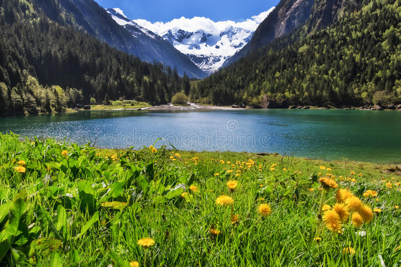 paysage idyllique de montagne dans les alpes dans le printemps avec les fleurs et le lac de. Black Bedroom Furniture Sets. Home Design Ideas