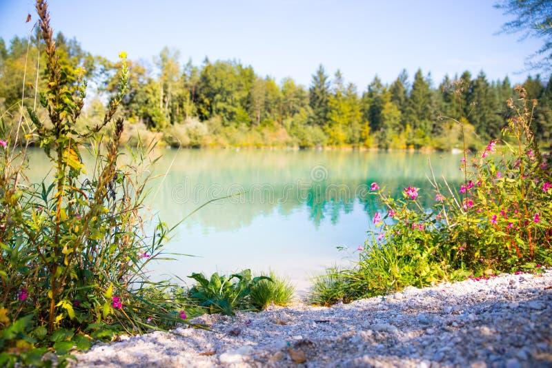 Paysage idyllique de rivage avec Pebble Beach, eau bleue, fleurs et bois image libre de droits