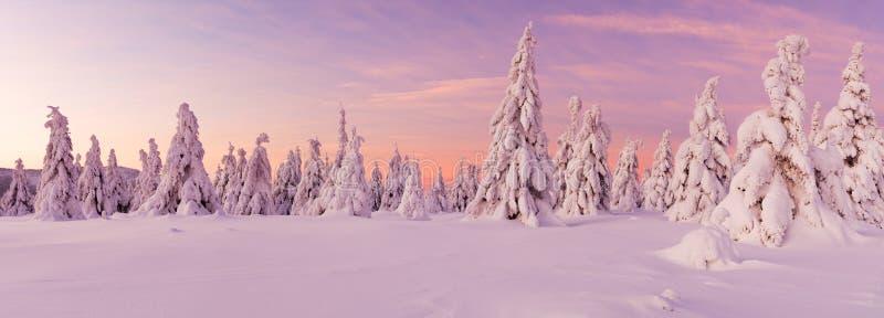 Paysage idyllique panoramique d'hiver photos libres de droits