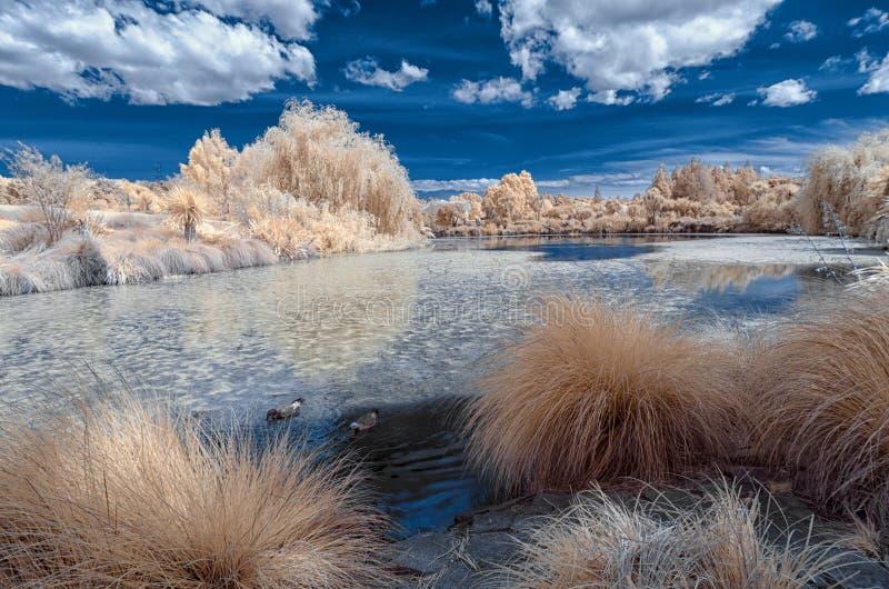 Paysage infrarouge dans des couleurs fausses d'un lac et d'un feuillage image libre de droits
