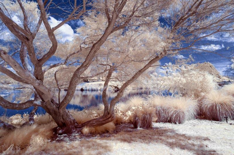 Paysage infrarouge dans des couleurs fausses d'un ter de lac et de feuillage images stock