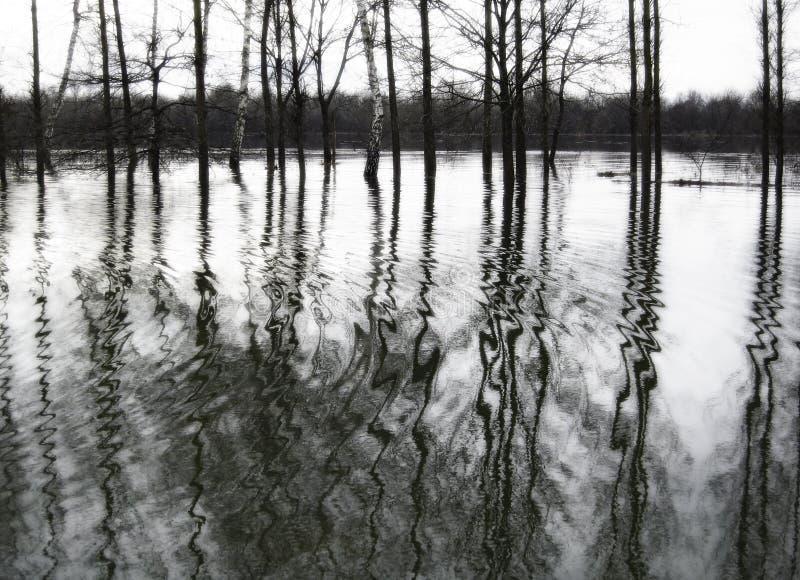 Paysage inondé noir et blanc photo stock