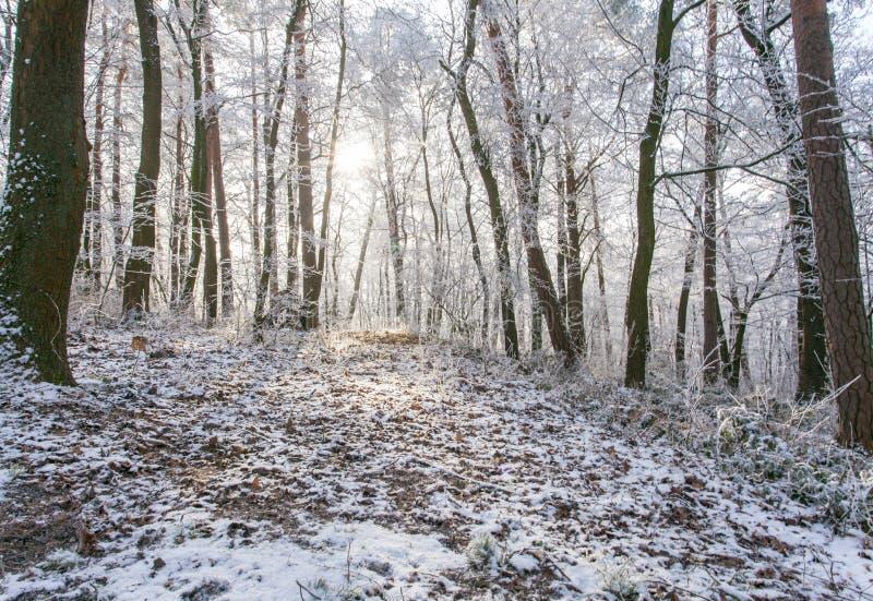 Paysage magique congelé blanc de forêt d'hiver dans la lumière de matin images libres de droits