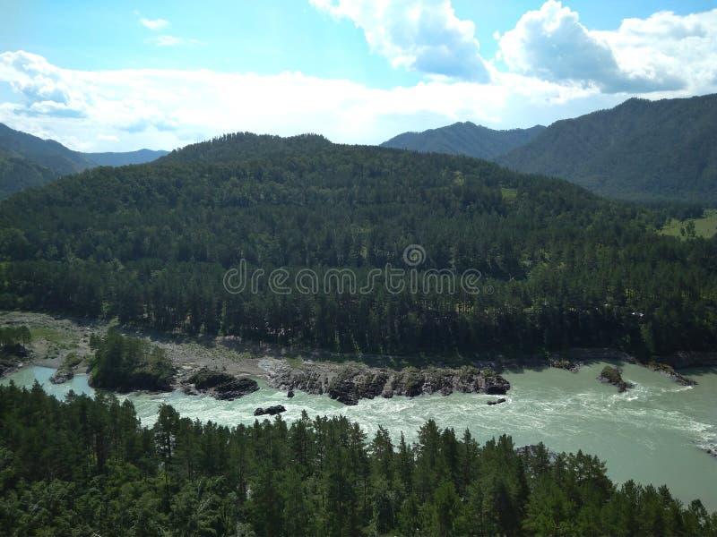 Paysage magnifique d'Altai de montagne avec des branches, cèdre sur les montagnes de rivière de Katun sur les banques photographie stock