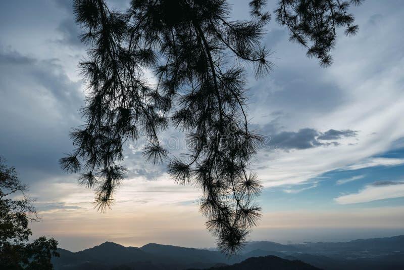Paysage magnifique de terrain montagneux luxuriant, brouillard couvert, jungle TROPICALE images libres de droits