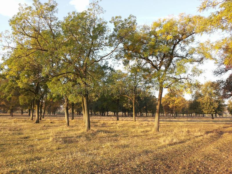 Paysage magnifique de terrain plat La beauté de la région sauvage Prés sans fin Promenade à l'air frais Nettoyez la nature sur un photos stock