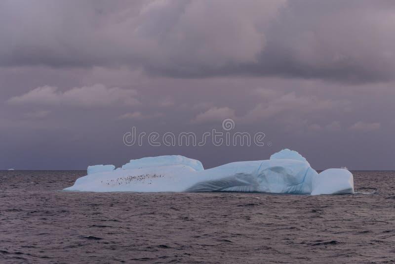 Paysage marin antarctique avec l'iceberg images stock