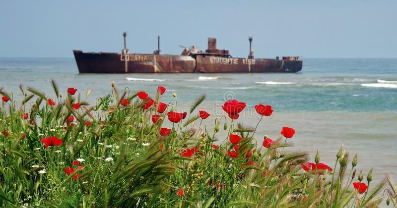 Paysage marin avec des pavots image libre de droits