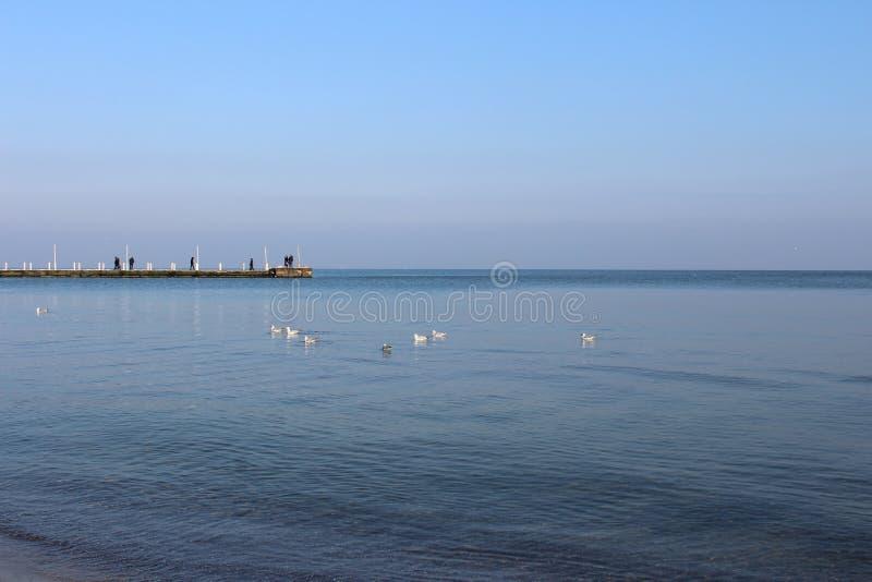 Paysage marin dans des mouettes d'hiver se reposant sur l'eau image libre de droits