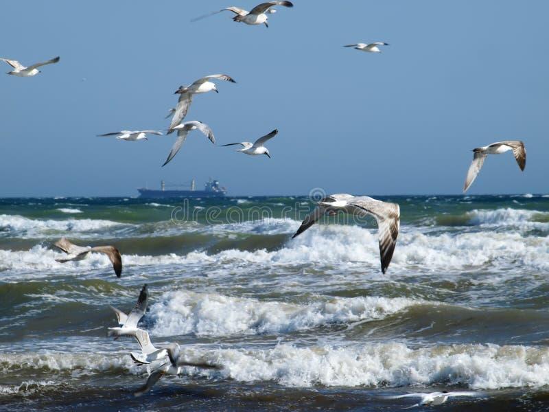 Paysage marin dans une tempête photos stock
