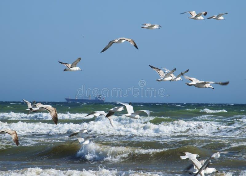 Paysage marin dans une tempête photographie stock libre de droits