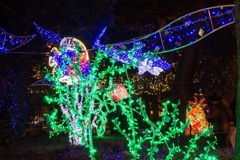 Paysage marin de lumières de Noël images libres de droits