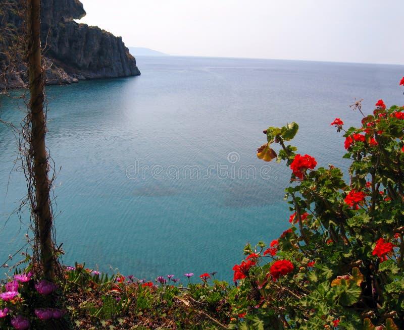 Paysage marin derrière les fleurs image stock