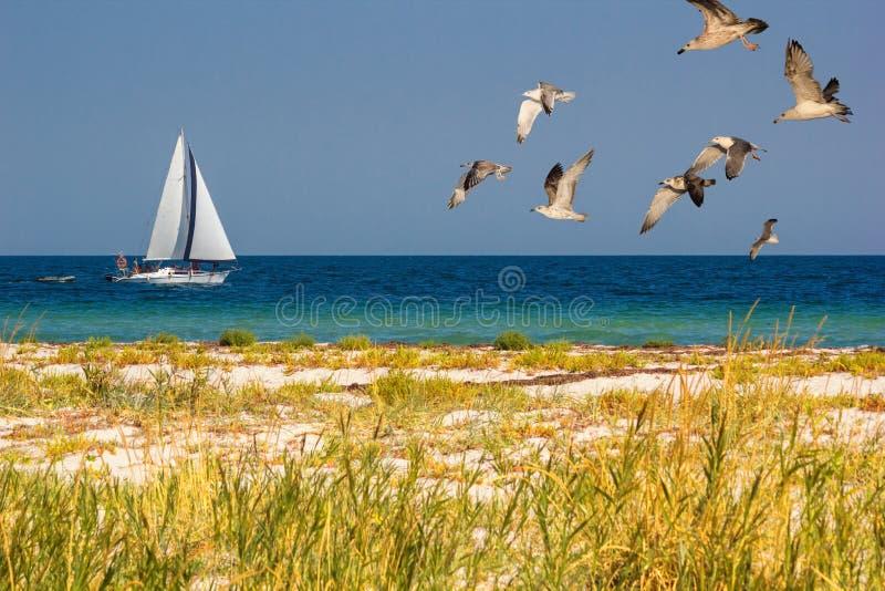 Paysage marin - voilier sur les vagues de mer avec le troupeau des mouettes images stock