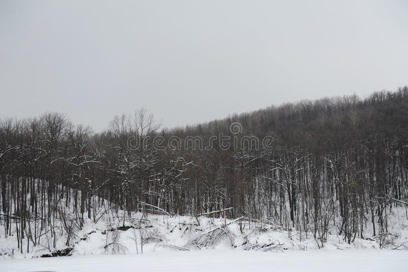 Paysage monochrome gris d'hiver photos libres de droits