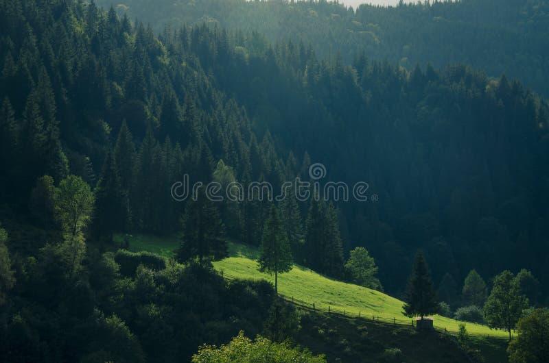 Paysage montagneux du matin avec une prairie verte et de grands conifères au soleil images stock