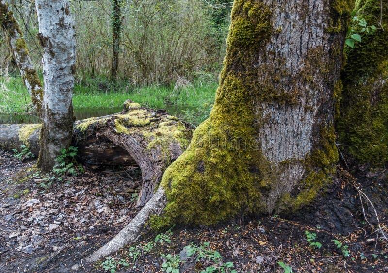 Paysage moussu d'arbre images libres de droits