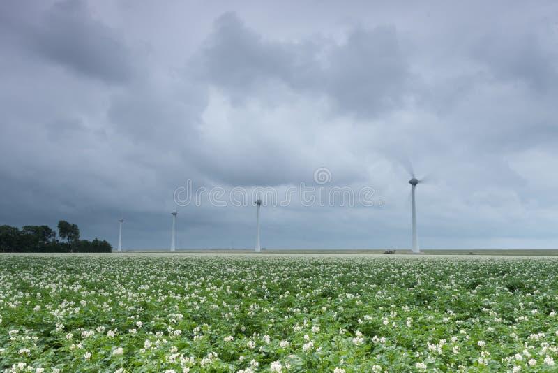 Paysage néerlandais avec des turbines de vent photos libres de droits