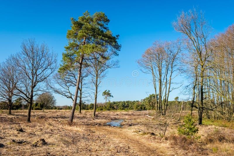 Paysage néerlandais de Buurserzand près de Haaksbergen en mars Twente, Overijssel, Pays-Bas images libres de droits
